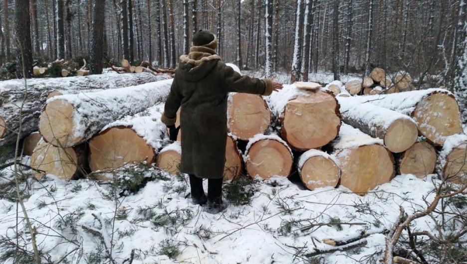 Жители Барнаула бьют тревогу из-за рубок леса.