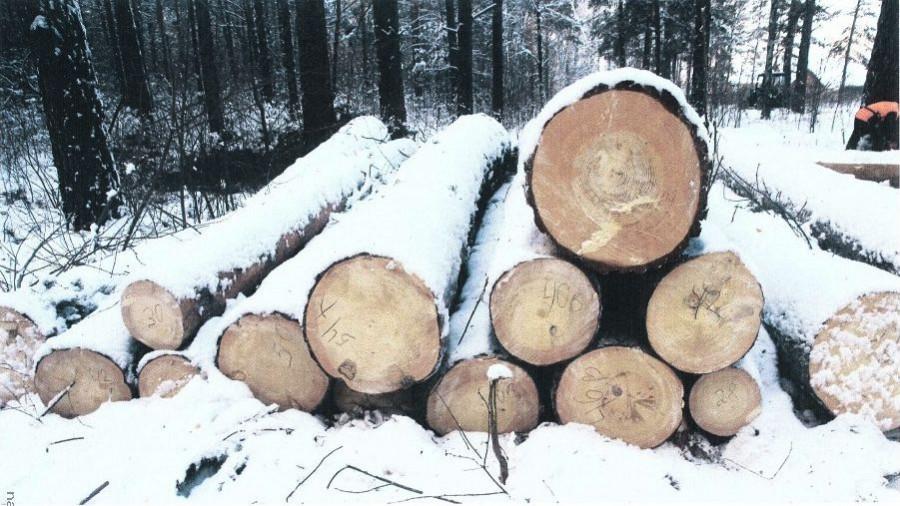 Рубка леса у поселка Пригородный.