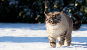 Кот в снегу.