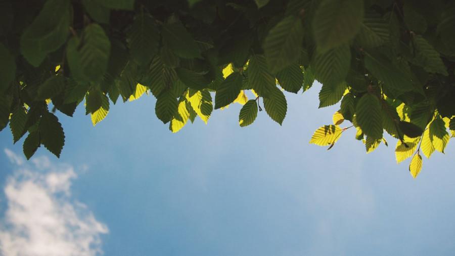 Листья дерева летом. Небо.