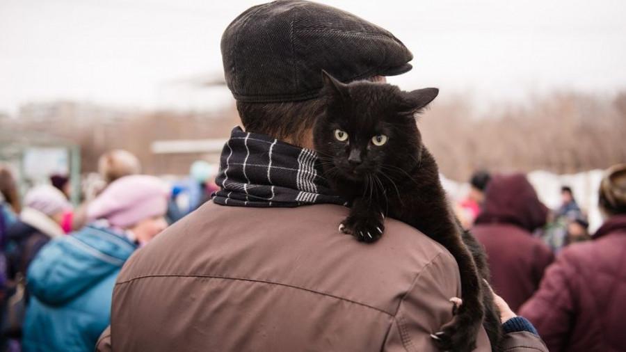 В Барнауле прошел Праздник мартовских котов