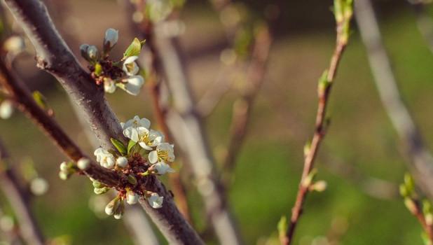 Весна. Цветение.
