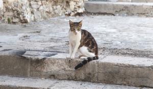 Уличная лестница, кошка.