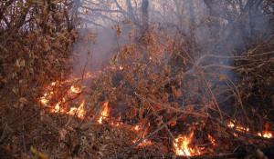 Из-за сельхозпалов травы горят деревья.