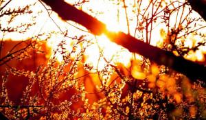 Солнце, тепло.