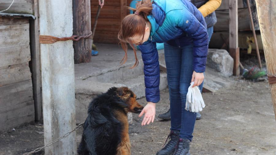 «Они отгрызают себе лапы». Почему в Барнауле приюты отпускают собак, а закон о домашних животных требует доработки - фото 11
