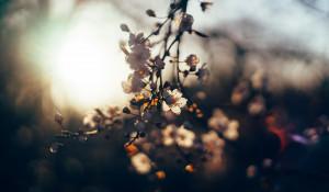 Цветы.Солнце. Лето.