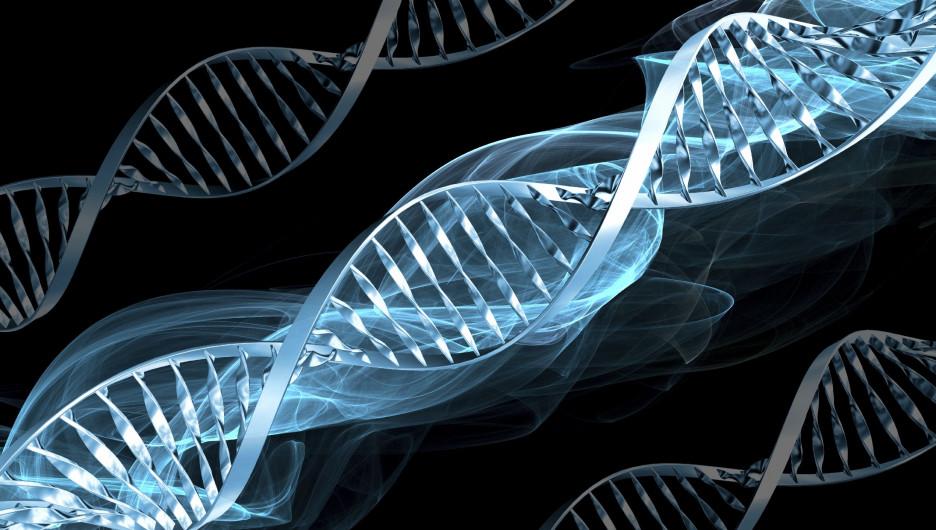 Геном человека. ДНК.