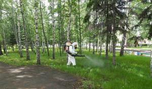 Профессиональная акарицидная обработка территорий: клещам не выжить!