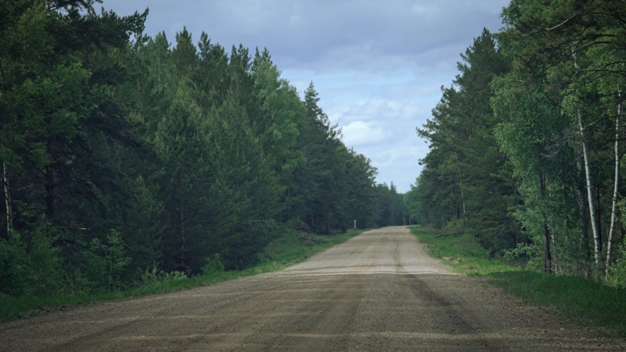 Дорога в бору.