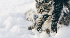 Кошка зимой.