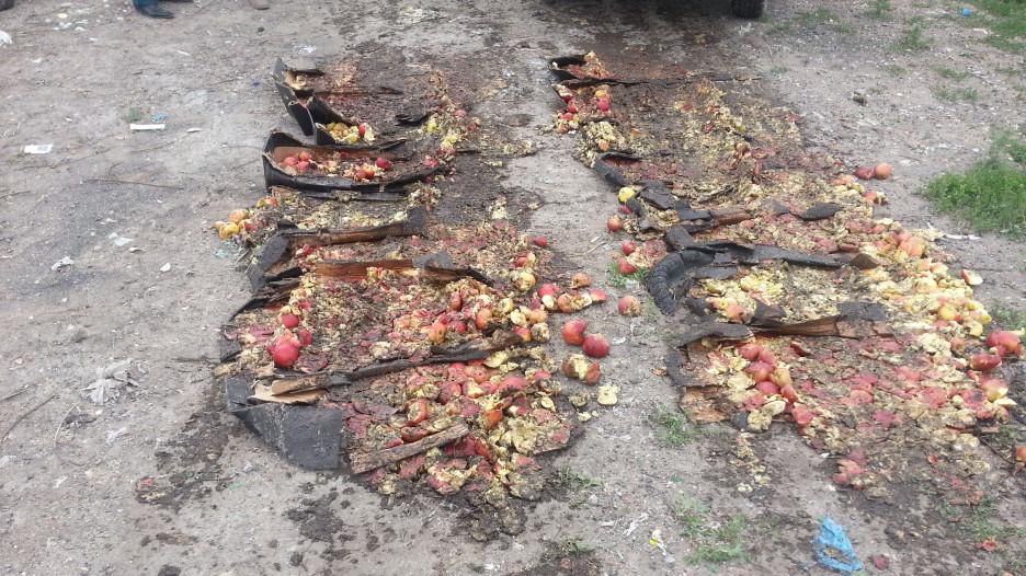 В Рубцовске уничтожили польские яблоки.
