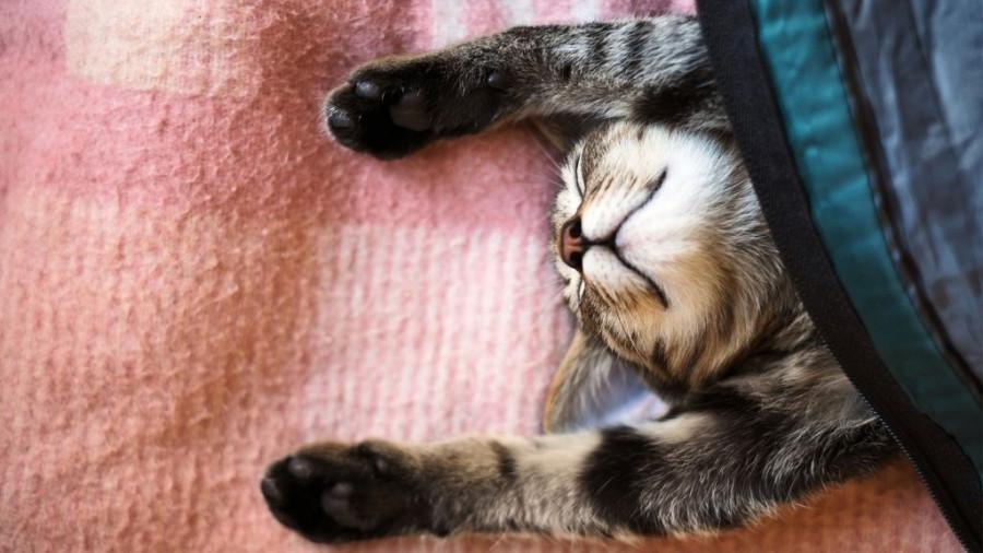 Кот спит.