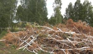 Черный лесоруб срубил на дрова 21 березу в Каменском районе.
