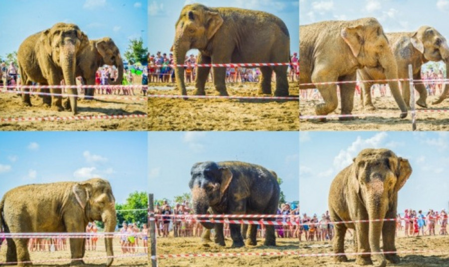 Слоны в Яровом.