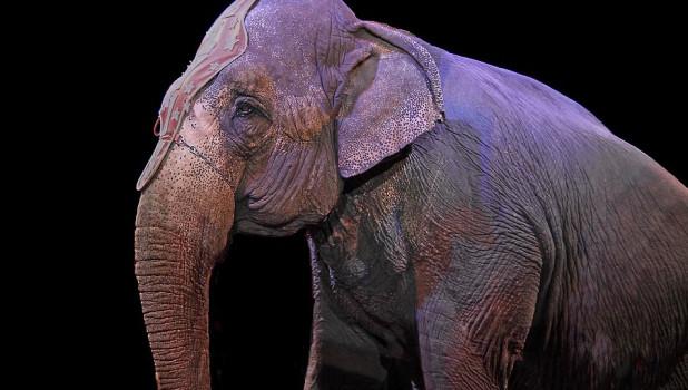 Шоу слонов великанов.