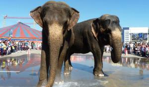 Купание слонов в Барнауле.