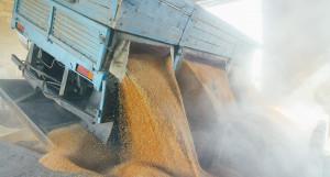 Приемка зерно нового урожая.