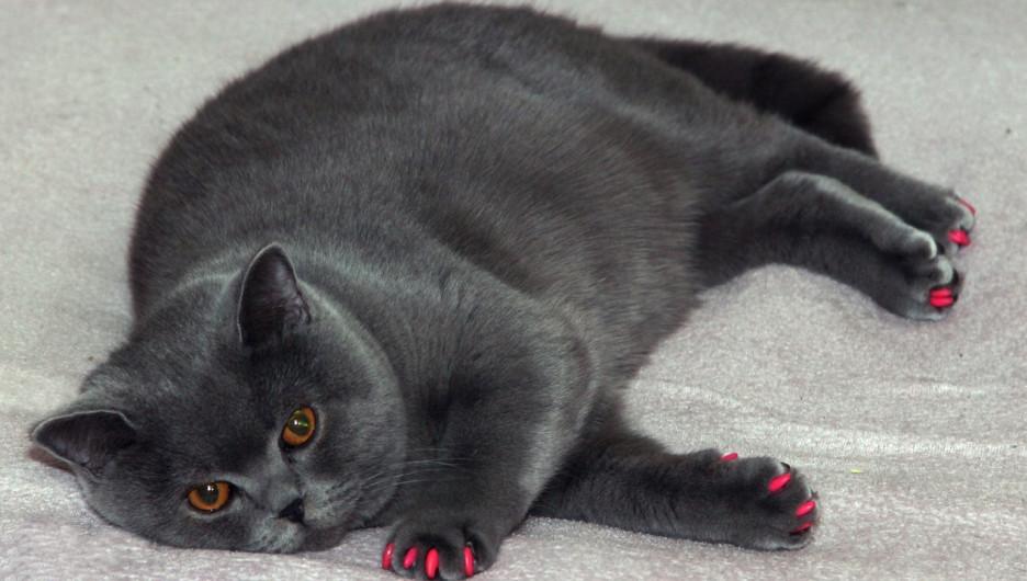 Лишний вес. Толстый кот.