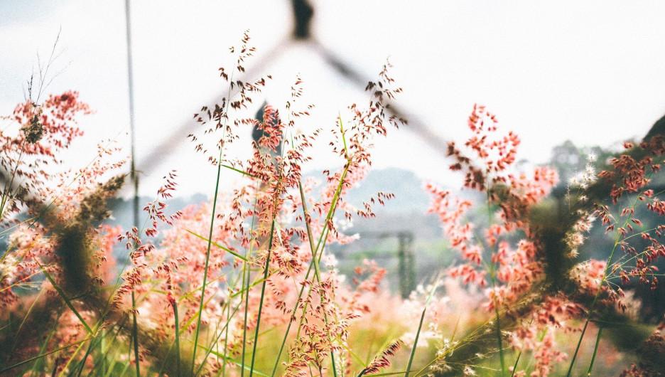 Лето, цветы.