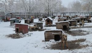 "Собаки в приюте ""Ласка""."