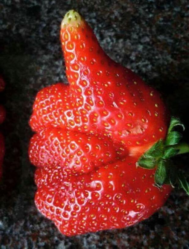 Для открыток, картинки фруктов смешных