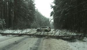 Последствия урагана в Бийске.