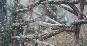 Снег. Мокрый снег.