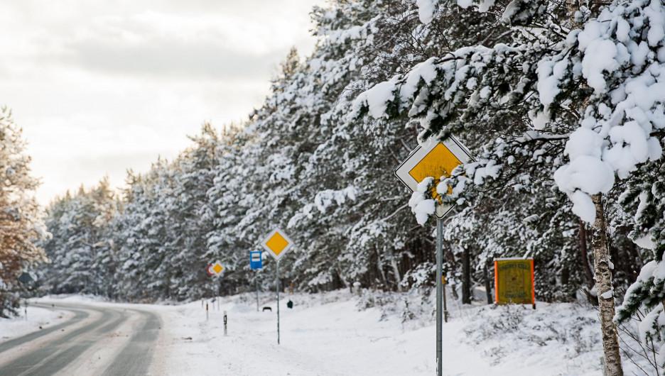 Снег. Дорога в лесу.