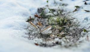 Оттепель Снег.