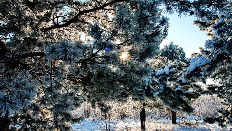 Морозы. Зима.
