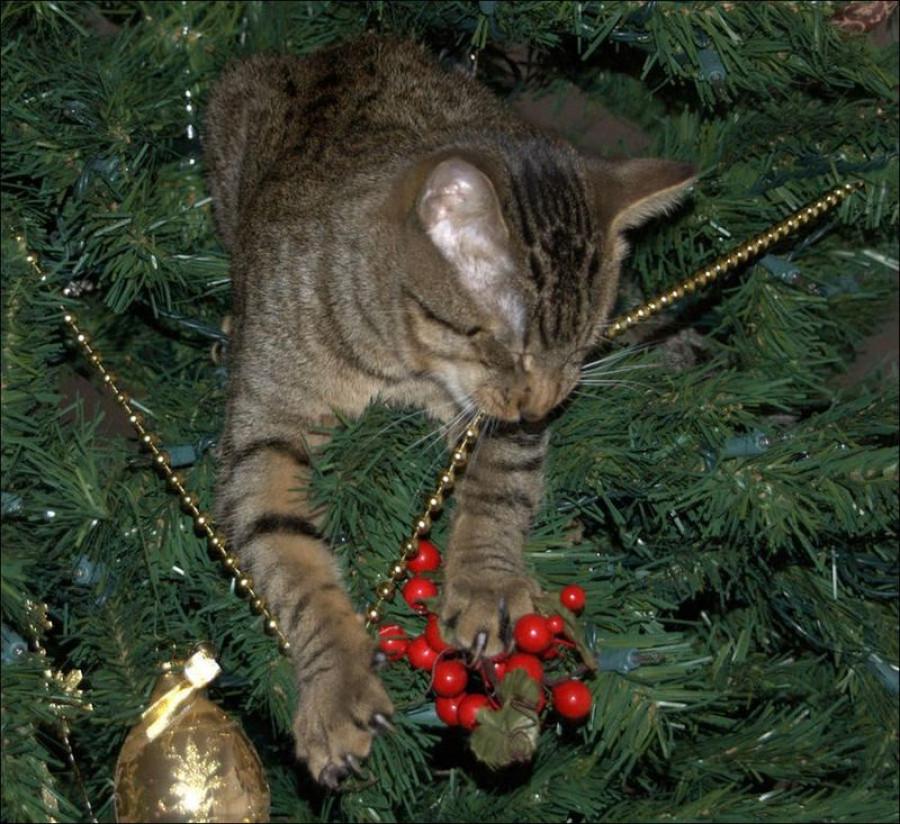 Коты и ёлки.