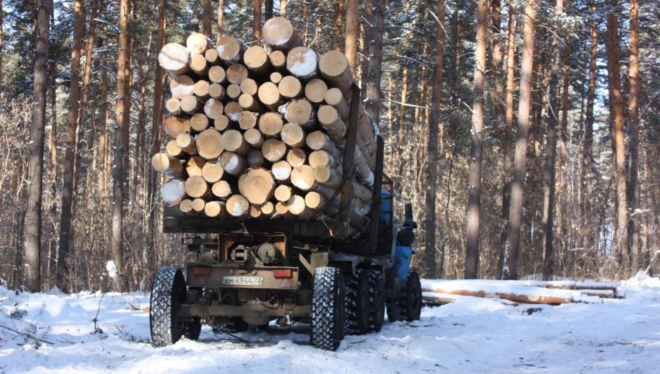 Рубки в лесу.