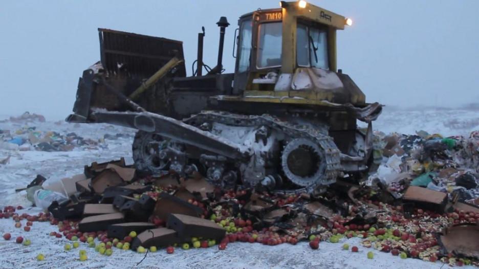 Уничтожение яблок в Барнауле.