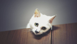 Кот грустит.