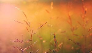 Трава. Лето. Солнце.