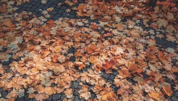 Теплая осень.