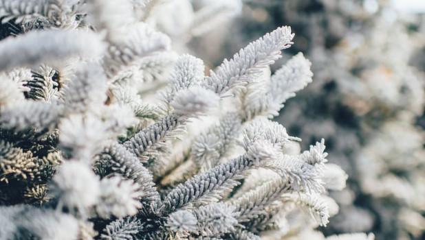 Зима в лесу. Снег.