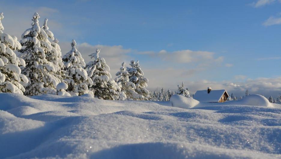 Зима в лесу. Снег.  Много снега.