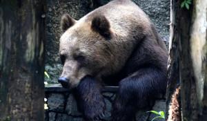 Медведь грустит.