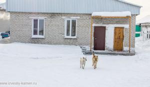 Собаки из психбольницы.