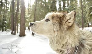 Собака в зимнем лесу.