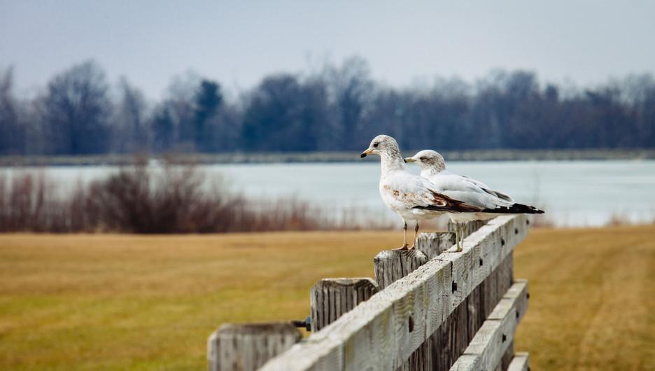 Чайки чего-то ждут.