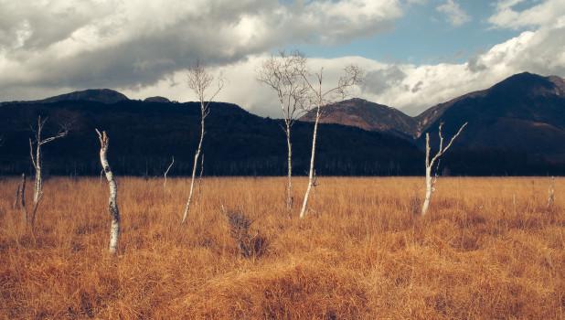 Лес, горы.