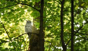 Сова в лесу на дереве.