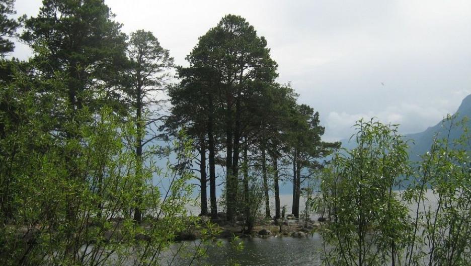 Устье реки Кокши.
