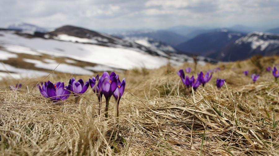 Весна. Цветы в горах.