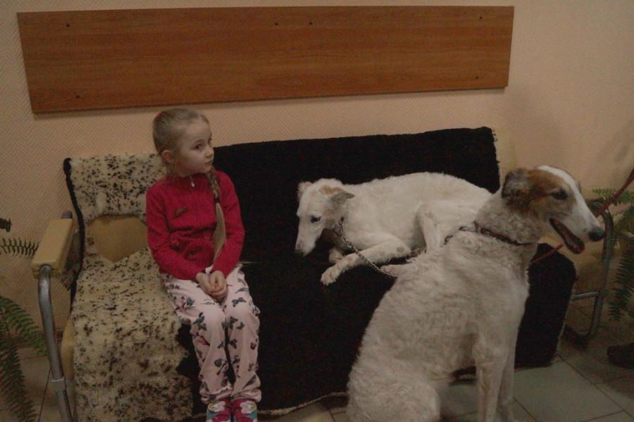 «Они отгрызают себе лапы». Почему в Барнауле приюты отпускают собак, а закон о домашних животных требует доработки - фото 8