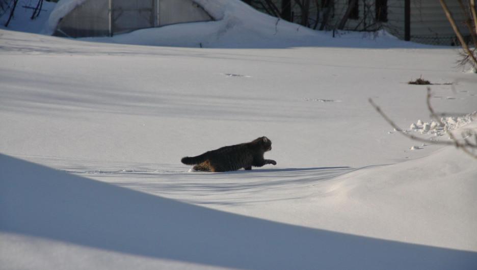 Барнаульский кот ждет весну.