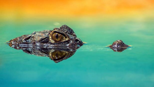 Крокодил.